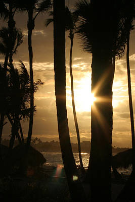 Photograph - Sunset And Palm Trees Dominican Republic by Stephanie  Kriza