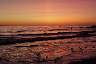 Photograph - Sunset And Sandpipers by Theo OConnor