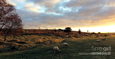 Sunset And Sheep Art Print by Merice Ewart