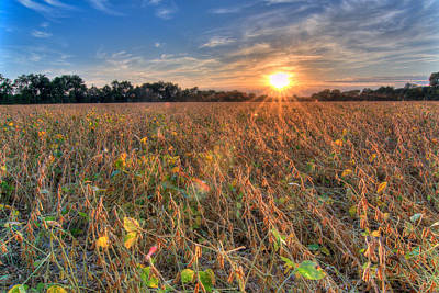 Photograph - Sunset And Soybeans by Steve Stuller