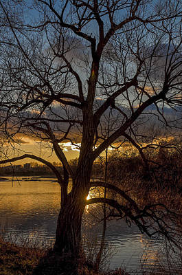 Photograph - Sunset And The Tree by Celso Bressan