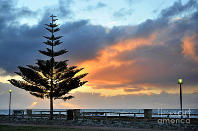 Photograph - Sunset And Tree by Yew Kwang