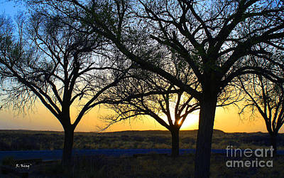 Photograph - Sunset And Trees by Roena King