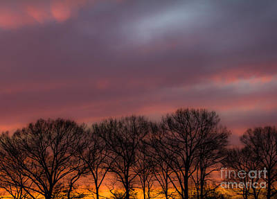 Photograph - Sunset And Trees by Ursula Lawrence