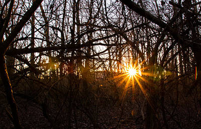 Photograph - Sunset And Vine by Haren Images- Kriss Haren