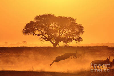 Blesbok Wall Art - Photograph - Sunset And Wildlife Super Gold by Hermanus A Alberts