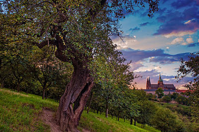 Photograph - Sunset At Petrin Park. Prague by Jenny Rainbow