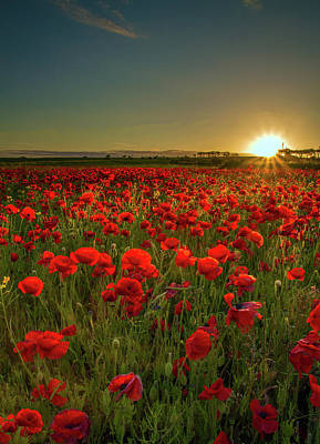 Photograph - Sunset At Poppy Field by Danny Birrell Photography