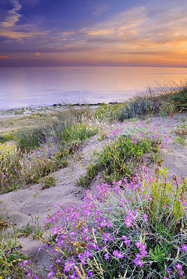 Sunset At The Beach  Flowers On The Sand Art Print by Guido Montanes Castillo
