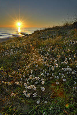 Sunset At The Beach  White Flowers On The Sand Art Print by Guido Montanes Castillo