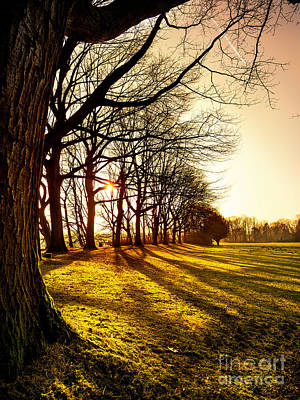 Sunset At The Park Art Print