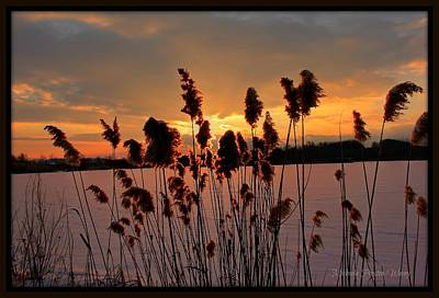 Art Print featuring the photograph Sunset At The Pond 3 by Michaela Preston