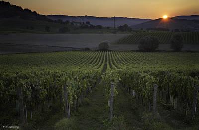 Photograph - Sunset At The Vineyard by Fran Gallogly