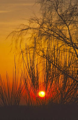 Featured Tapestry Designs - Sunset behind trees by Patrick Kessler