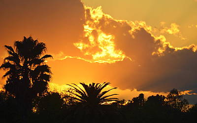 Photograph - Sunset Behind The Palms by AJ  Schibig