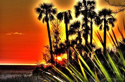 Photograph - Sunset Behind The Palms by Richard Zentner