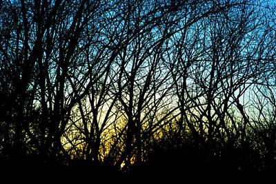 Sunset Behind Trees Art Print