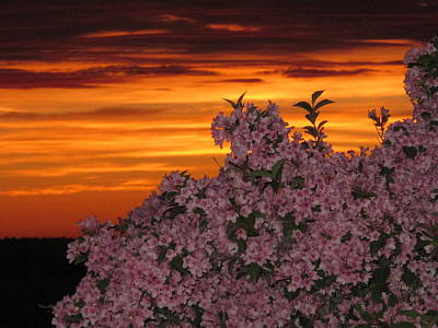 04003 Photograph - Sunset Blooms by Donnie Freeman