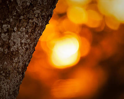 Photograph - Sunset Bokeh by Jeff Mize