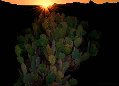 Photograph - Sunset Cactus by Britt Runyon