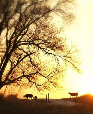 Cattle Drive Photograph - Sunset Call.. by Al  Swasey
