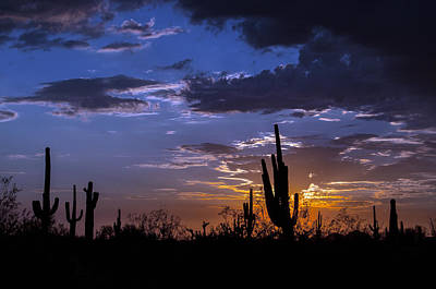 Photograph - Sunset Calm by Tam Ryan