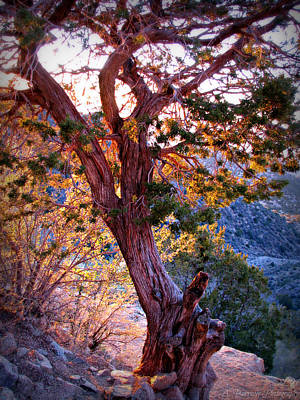 Sunset Colors Of A Juniper Tree Art Print
