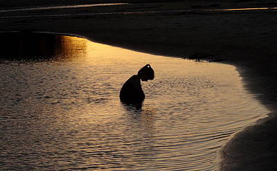 Photograph - Sunset Contemplation by Peter Mooyman