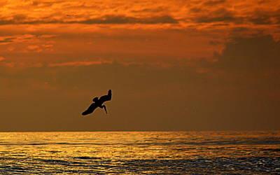 Photograph - Sunset Dive by AJ  Schibig