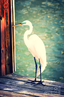 Egrets Photograph - Sunset Dock Visitor by Carol Groenen