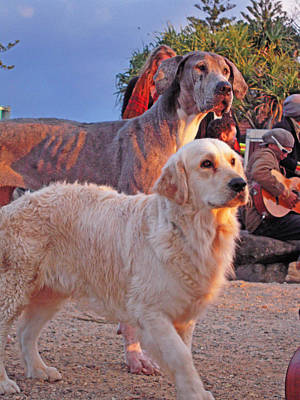 Photograph - Sunset Dog Dreaming by Ankya Klay