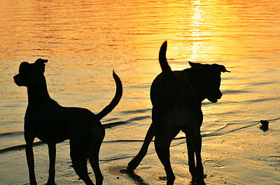 Canines Digital Art - Sunset Dogs  by Laura Fasulo
