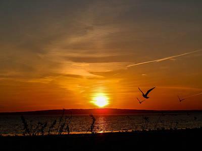 Photograph - Sunset Dream by Heather Sylvia