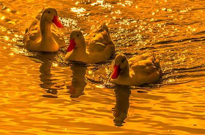 Sunset Ducks Art Print by Brian Stevens