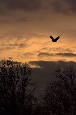 Sunset Eagle Art Print