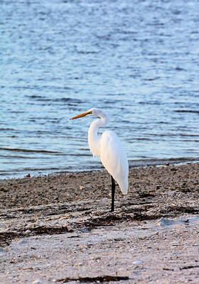 Photograph - Sunset Egret by Katherine White