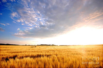 Harvest Photograph - Sunset Field by Michal Bednarek
