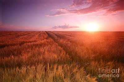Corn Photograph - Sunset Field Scenery by Michal Bednarek