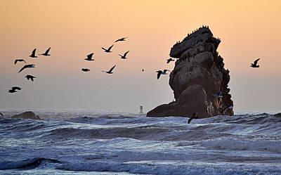 Photograph - Sunset Flight by AJ  Schibig