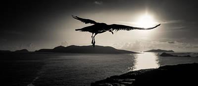 Photograph - Sunset Flight by Florian Walsh