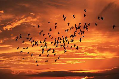 Photograph - Sunset Flight by Mandy Shupp