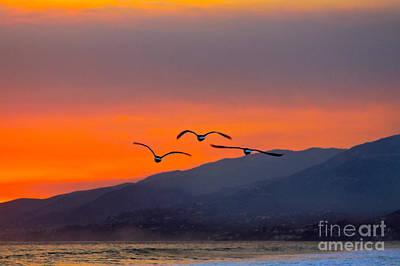 Sunset Flight Art Print by Maureen J Haldeman