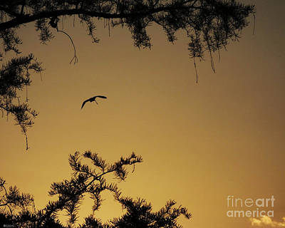 Photograph - Sunset Flight To Sleep Lake Martin La by Lizi Beard-Ward