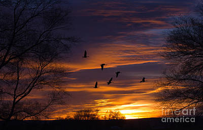 Photograph - Sunset Flight by Charlene  Aycock
