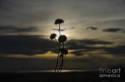 Sunset Flower Art Print by Nicole Markmann Nelson