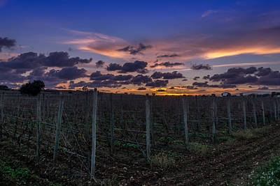 Sunset From Marsovin Vineyard Original by Matthew  Portelli