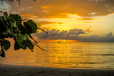 Jamaican Sunset Photograph - Sunset Fruit by Todd Reese
