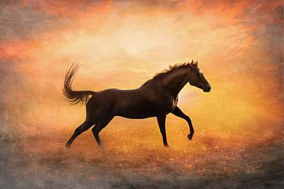 Sunset Gallop Art Print