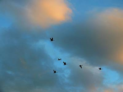 Photograph - Sunset Geese by Gene Cyr