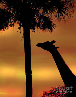 Photograph - Sunset Giraffe 2 by Joseph G Holland